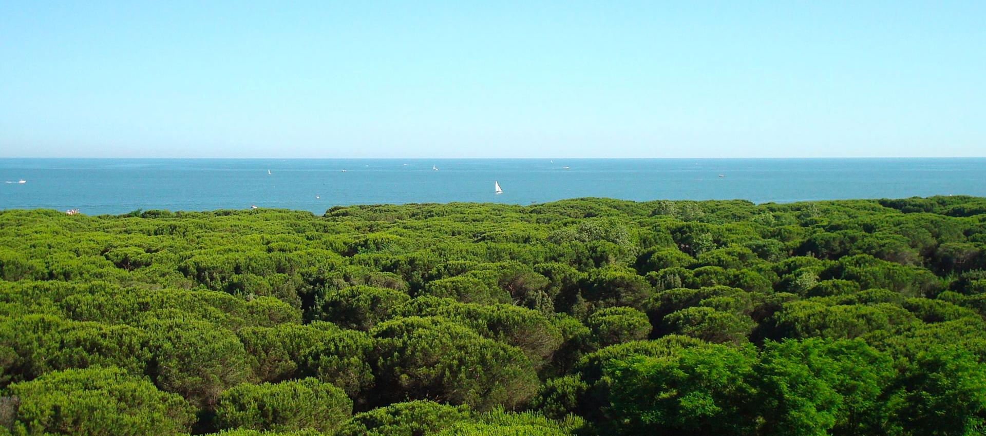 Immerso nel verde della pineta